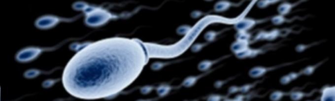 ごっくんさせる精液の中の精子はどうやって作られる?
