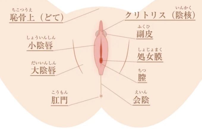 女性が気持ちいい性感帯のスポットは?正しい愛撫でセックス上手になる【刺激方法】